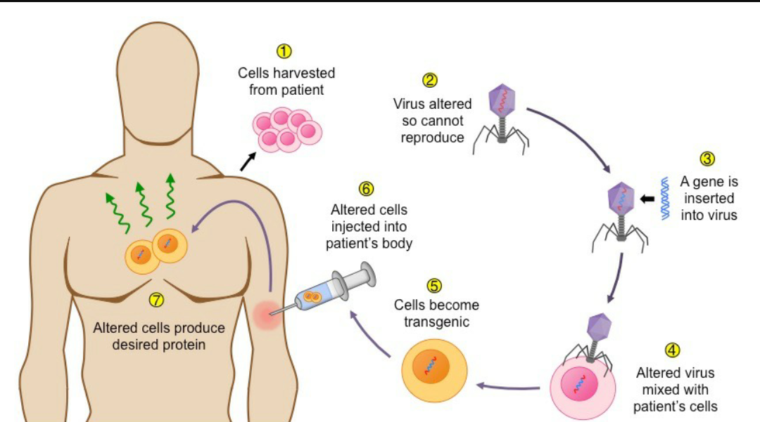first application of gene therapy