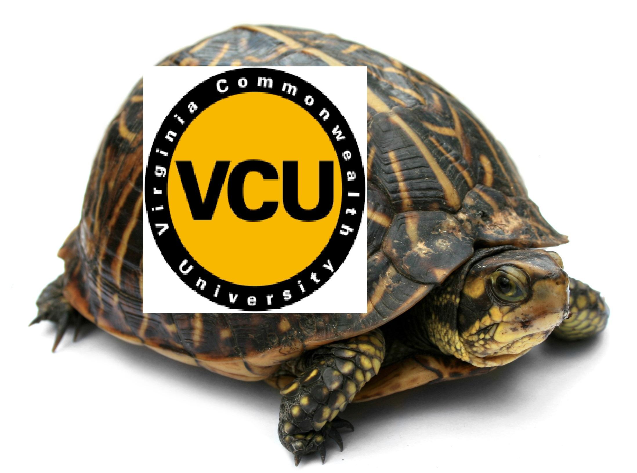 virginia commonwealth university application status