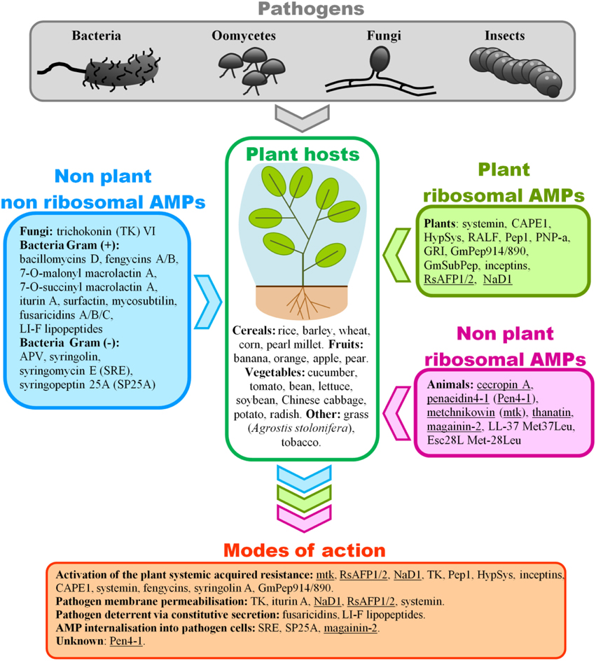 agricultural applications of transgenic animals
